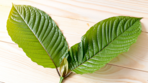 is kratom a herbal product