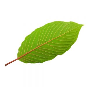 is kratom bad for you financially or not