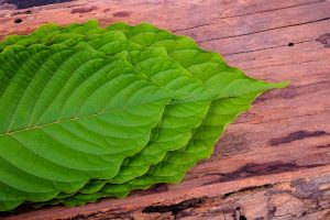 how much does kratom cost online