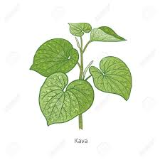 kratom and kava plant