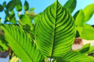 what is kratom definition