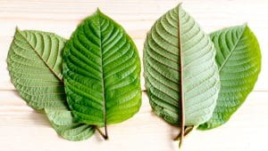 what are kratom strains