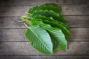 borneo kratom for sale usa