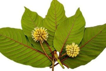 where to buy red vein kratom for sale