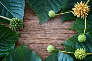 source of kratom