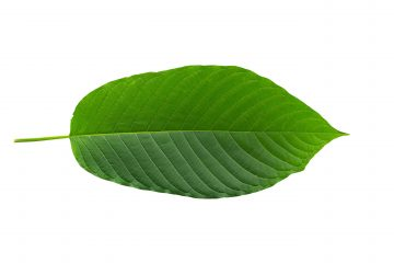 buy remarkable herbs kratom